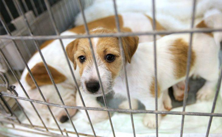 El partido propone dar más financiación a las protectoras de animales