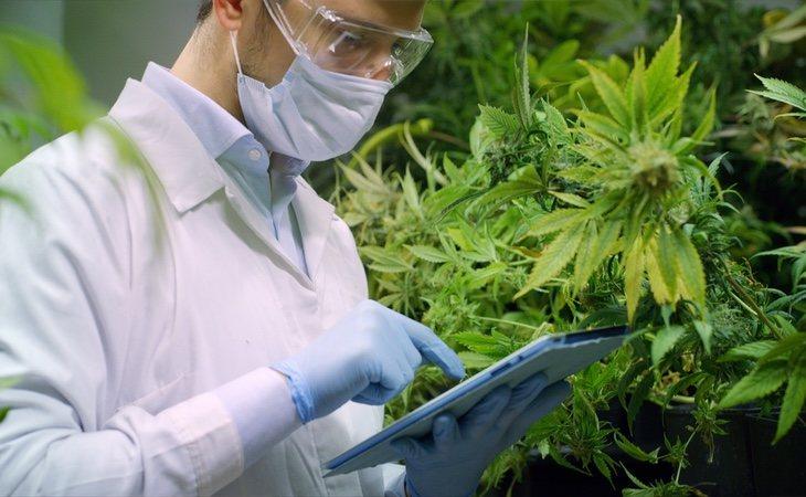 La marihuana es un sector que se encuentra en completo auge