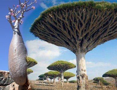Así es Socotra, la 'Isla Extraterrestre' escondida en pleno Mar Arábigo