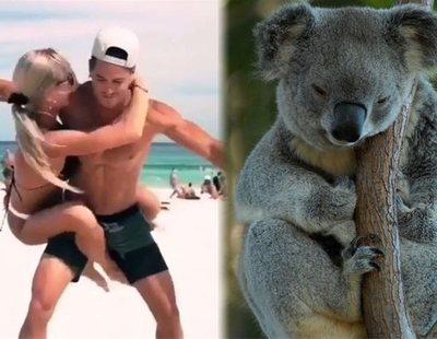 'Koala Challenge': El último reto viral que triunfa en las redes