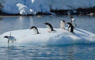 El hielo del Ártico desaparecerá en 2030