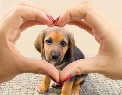Los 7 beneficios que tener mascotas aporta a tu salud