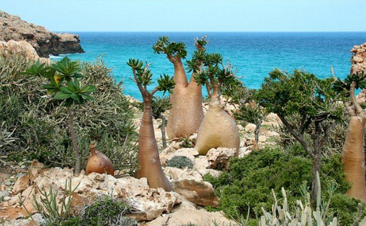 La flora de Socotra es completamente inusual