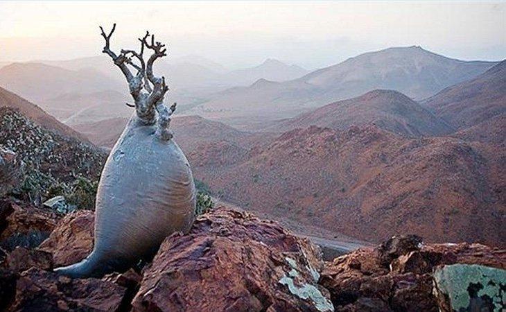 La isla de Socotra cuenta con una larga lista de endemismos