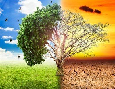 5 alertas medioambientales: La ONU advierte sobre la situación crítica del planeta