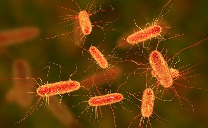 Alguna de estas bacterias viajan en las patas de las moscas