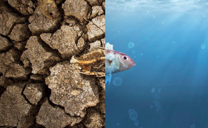 Este es el futuro de nuestros oceanos si no cambiamos las cosas