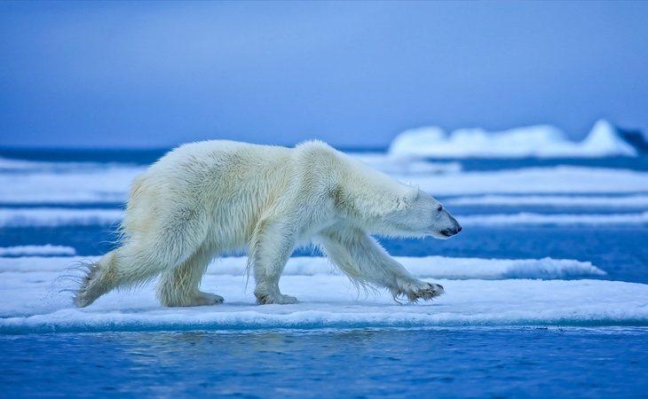 El calentamiento global tiene serias consecuencias para nuestra supervivencia