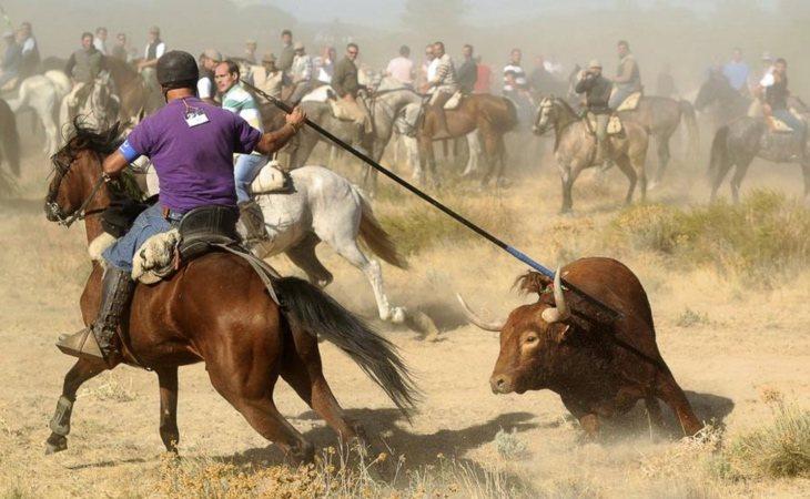 El Toro de la Vega, la polémica fiesta de Tordesillas