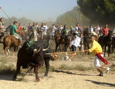 Fin a la tortura: el Supremo ratifica la prohibición del Toro de la Vega