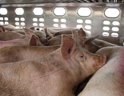 Vigilia vegana: así despiden a los animales que van a ser sacrificados en el matadero