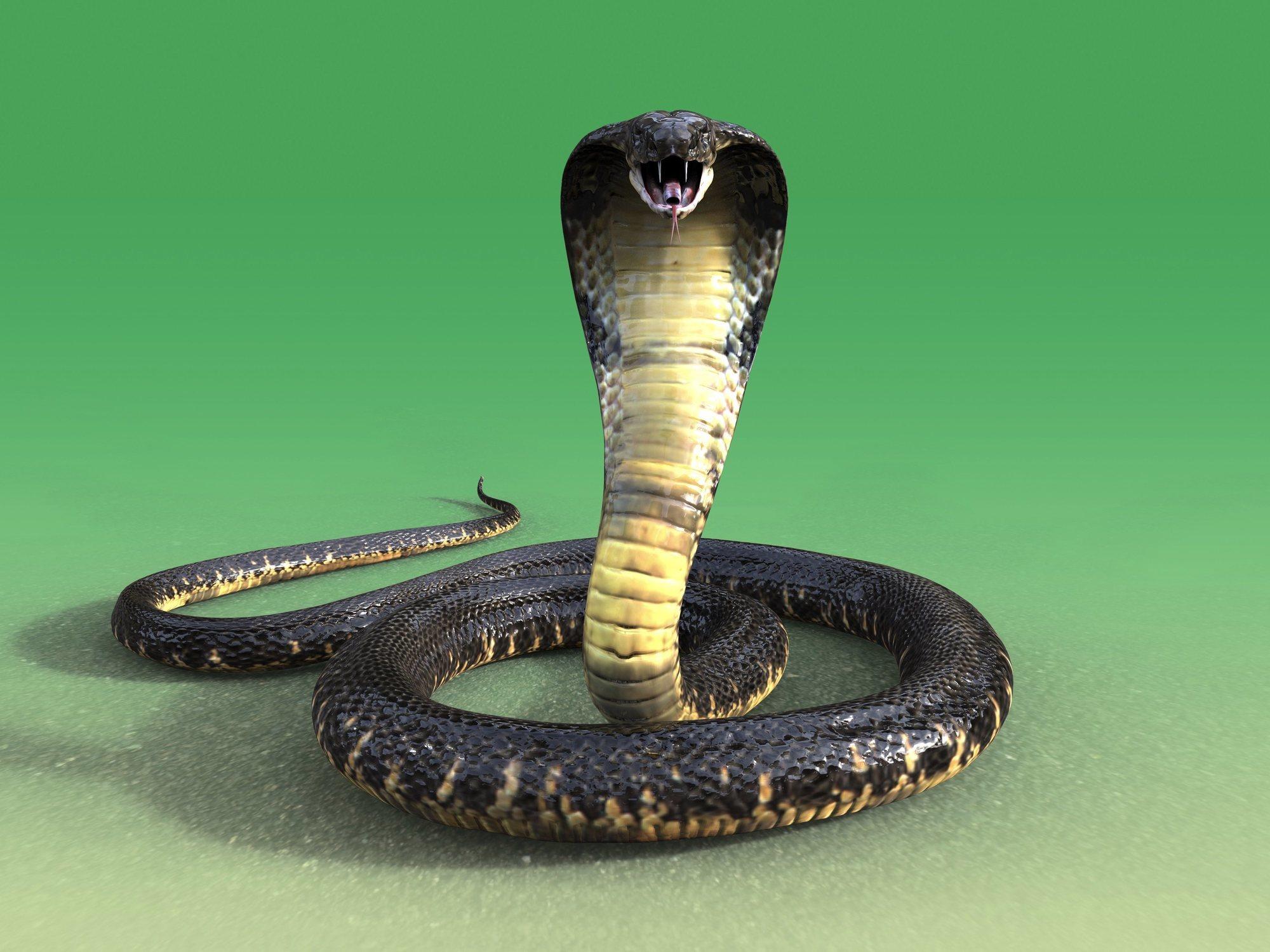 Una niña de 5 años sorprendida por una cobra venenosa de grandes dimensiones en el inodoro