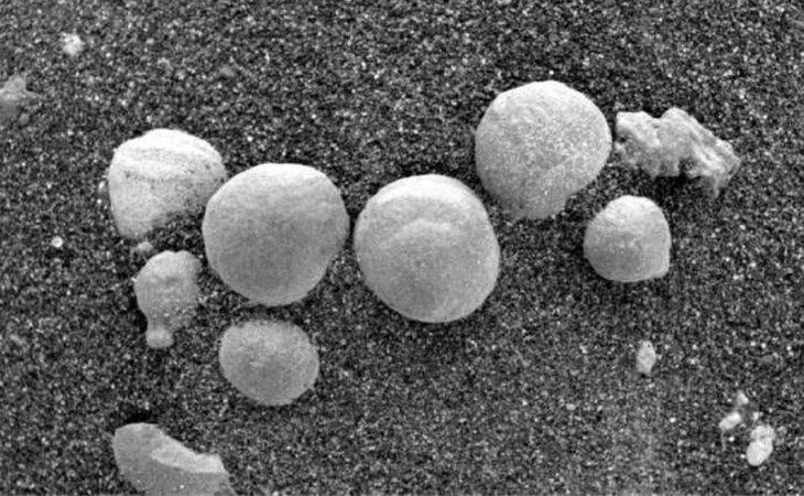 Los supuestos hongos marcianos