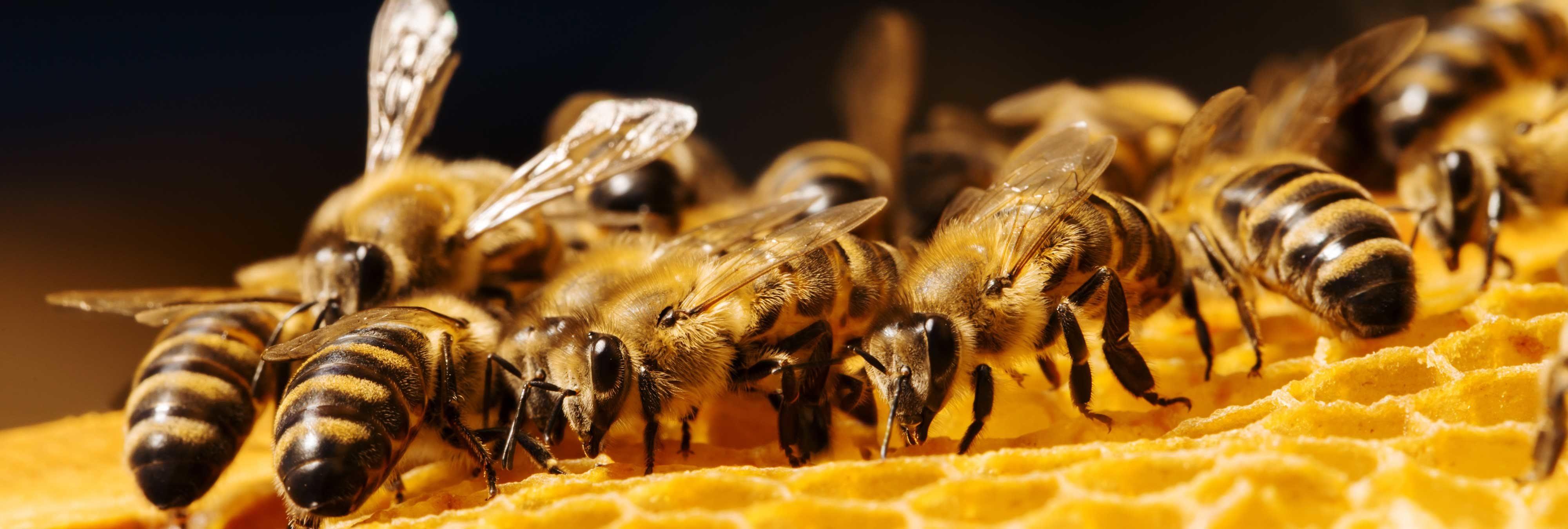 Acude al médico con el ojo dolorido y le encuentran cuatro abejas vivas dentro