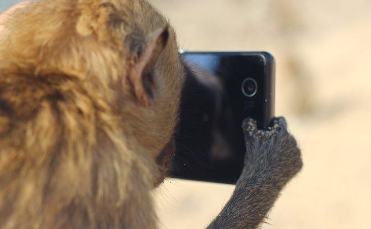 Los primates con genes humanos tienen comportamientos parecidos a los nuestros