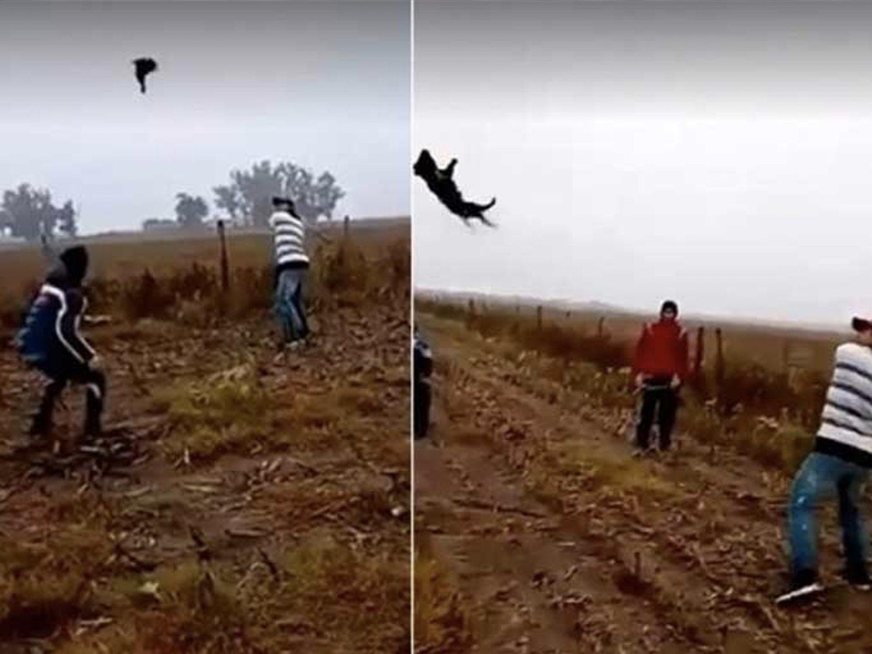 Se graban matando a un perro al que estaban bateando como si jugaran al beisbol entre mofas