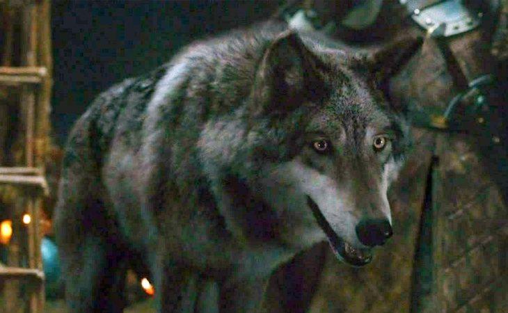 Viento Gris, el lobo huargo de Robb Stark