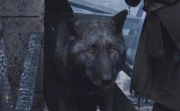 Peludo, el lobo huargo de Rickon Stark