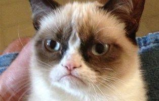 Muere Grumpy Cat, la gata más famosa de Internet