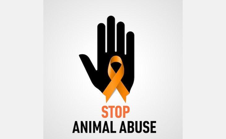 El autor del maltrato animal ha sido condenado a 27 meses de cárcel