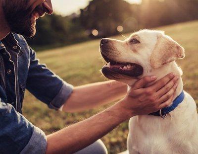 27 meses de cárcel por apedrear a un perro hasta matarlo delante de su hijo menor