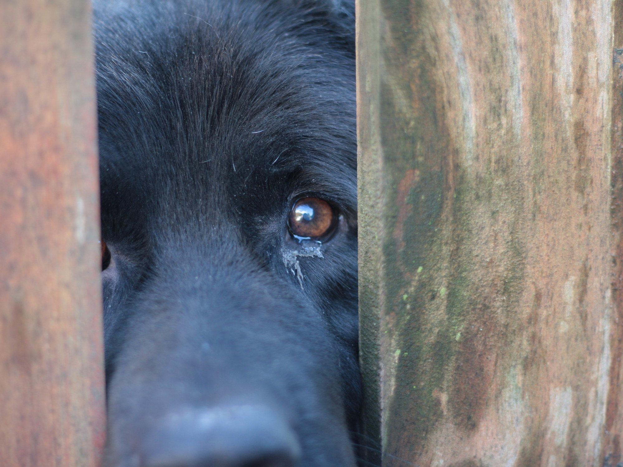 Denunciado tras grabarse violando a su perra en Galicia y contagiarle una enfermedad