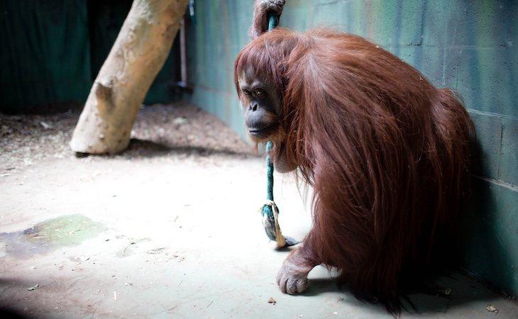 Sandra vive en el zoológico de Buenos Aires