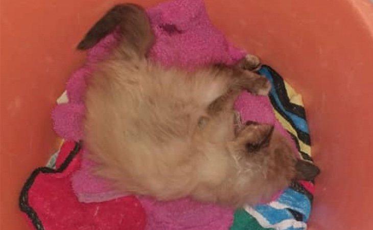Dulcinea fue encontrada y operada de urgencia debido a las heridas que le produjo la implosión de un petardo en su boca