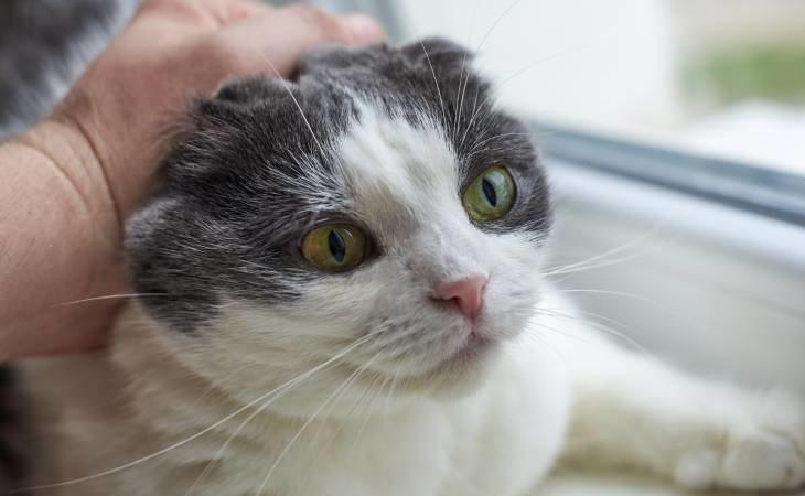 Una pareja ha sido condenada por ahorcar a un gato