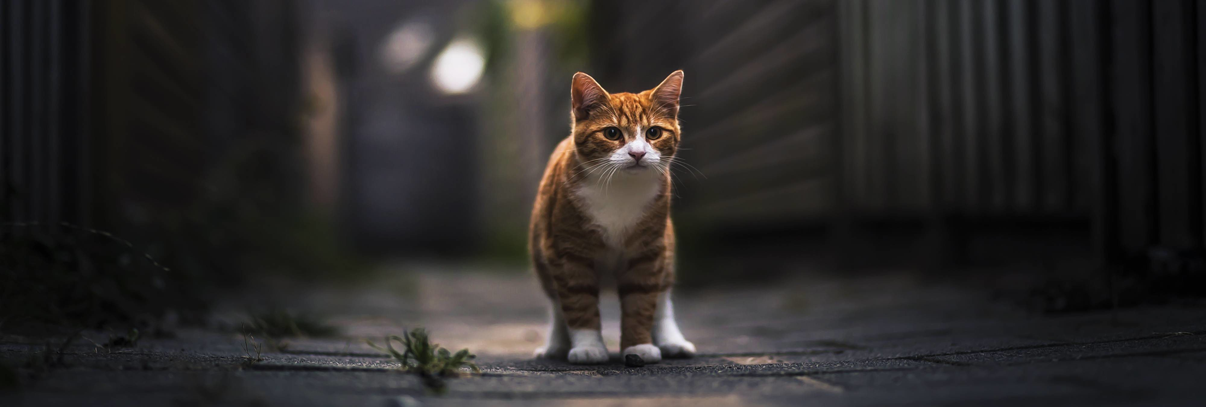 Seis meses de prisión a una pareja por ahorcar a un gato