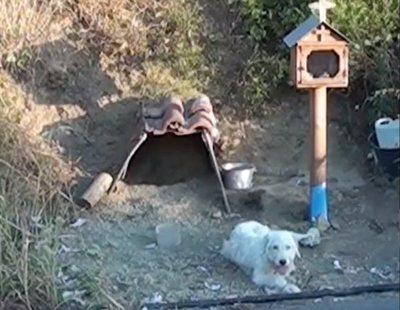 Este perro lleva año y medio esperando a su dueño en la curva donde murió por un accidente