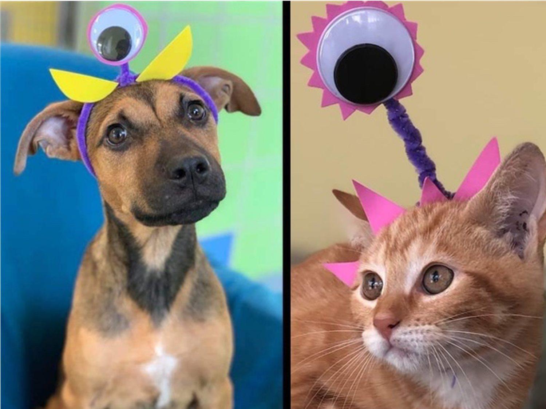 Un refugio disfraza a sus animales de alienígenas del Área 51 para que sean adoptados