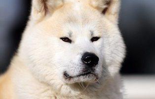 Acuchilla a su perro en Mataró mientras agredía a tres miembros de la misma familia