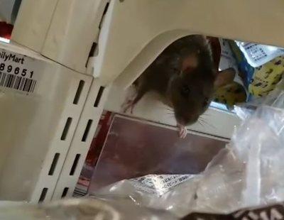Cierran una tienda 24 horas tras grabar su interior lleno de ratas caminando por la comida
