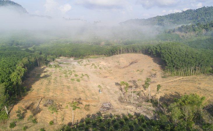 La deforestación del Amazonas crece en Brasil