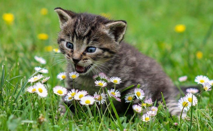 Los gatos evidencian si buscan el contacto o no a través de una serie de gestos