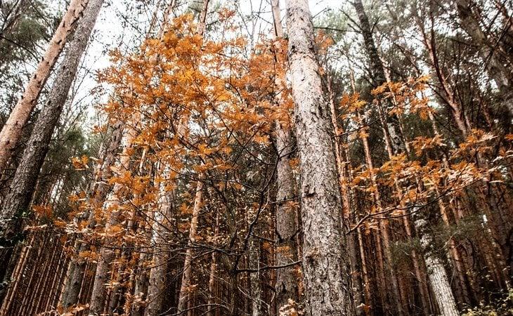 El Hayedo de Montejo se constituye como uno de los bosques de hayas más meridionales de Europa
