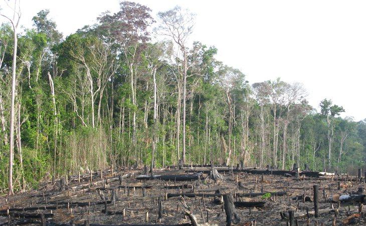 El incendio del Amazonas es el resultado de la deforestación practicada por la humanidad en sus frondosos y amplios bosques, supone la pérdida de biodiversidad y consecuencias para la salud