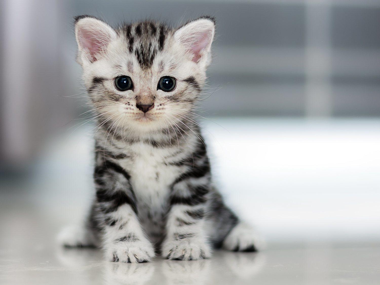 Unos jóvenes dan de fumar a un gatito en un nuevo caso de maltrato animal