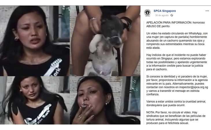 Comunicado de SPCA