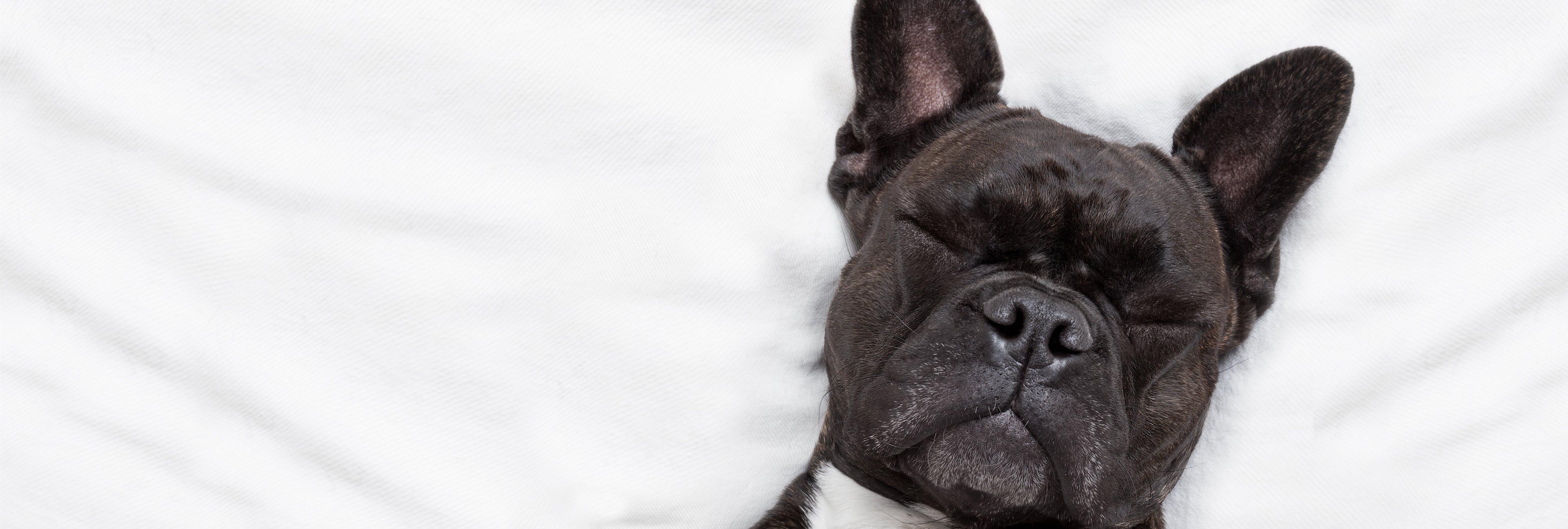 Graba a su perra fingiendo un desmayo para evitar que le corten las uñas y las redes arden