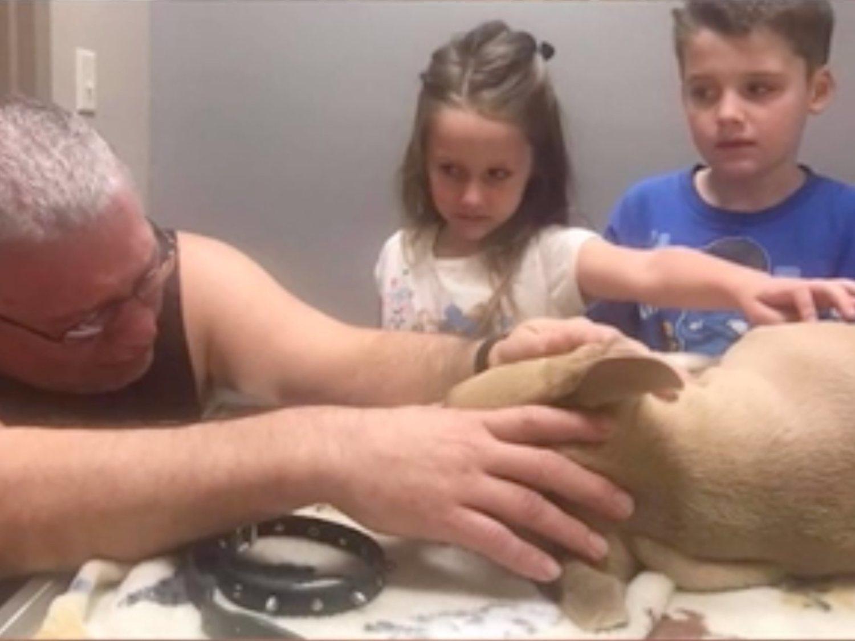 Muere un pitbull al intentar salvar a dos niños del ataque de una serpiente venenosa