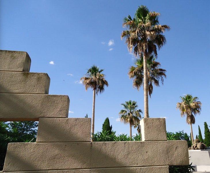 El cambio climático ha permitido cultivar algunas especies como la washingtonia robusta, que se encuentra en el parque Juan Carlos I