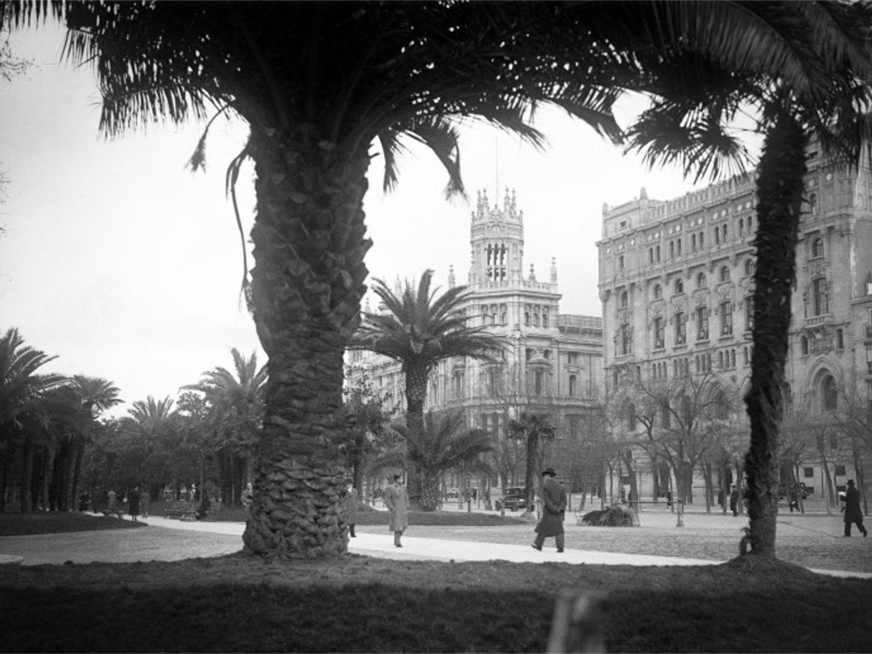 El palmeral de Madrid: la época en la que la capital quiso ser Sevilla (con mal resultado)