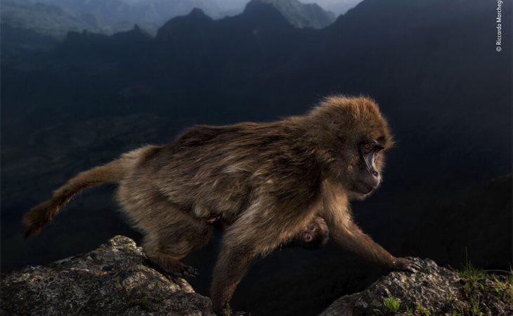 Riccardo Machgiani (Italia) ganó el premio 'Joven Fotógrafo del Año de Fauna Salvaje' 2019 en la categoría de 15 a 17 años