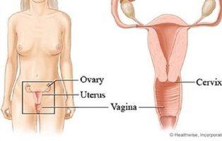 Plítode: el músculo inventado de la vagina convertido en bulo gracias a Wikipedia