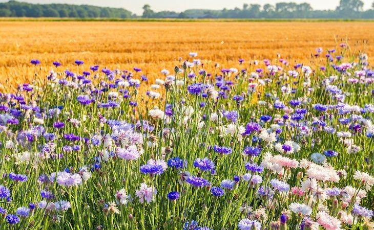 Hay alrededor de 435.000 especies de plantas en todo el planeta