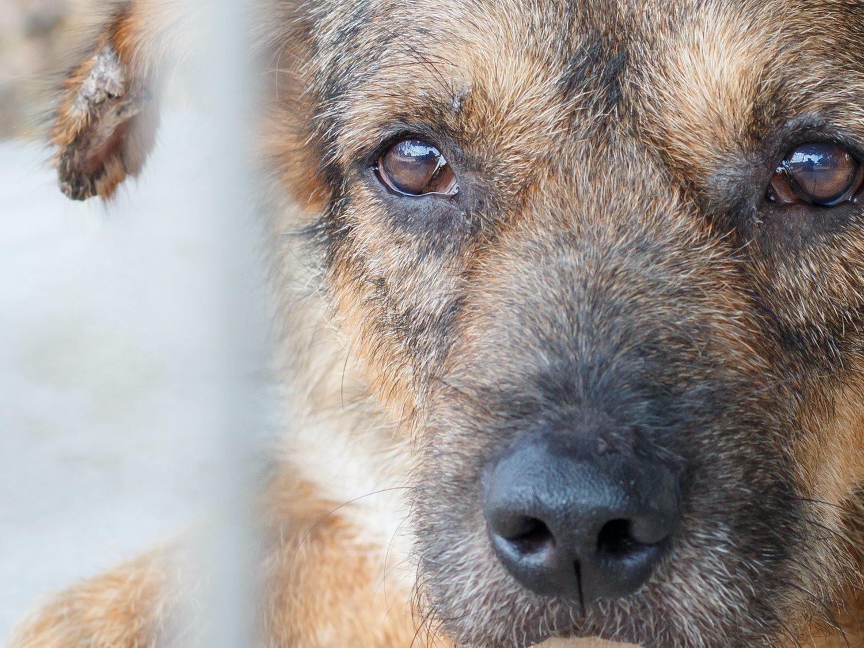 """Una cazador apalea y dispara a su perra en Lugo porque le """"sale de los cojones"""""""