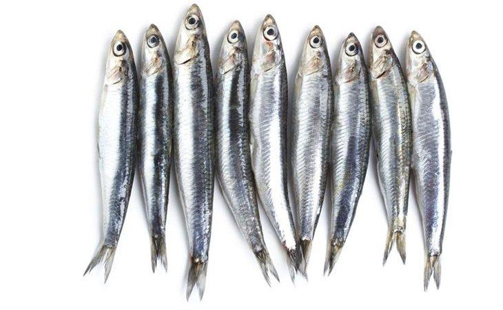 Los alimentos ricos en omega 3 tiene efecto antiinflamatorio