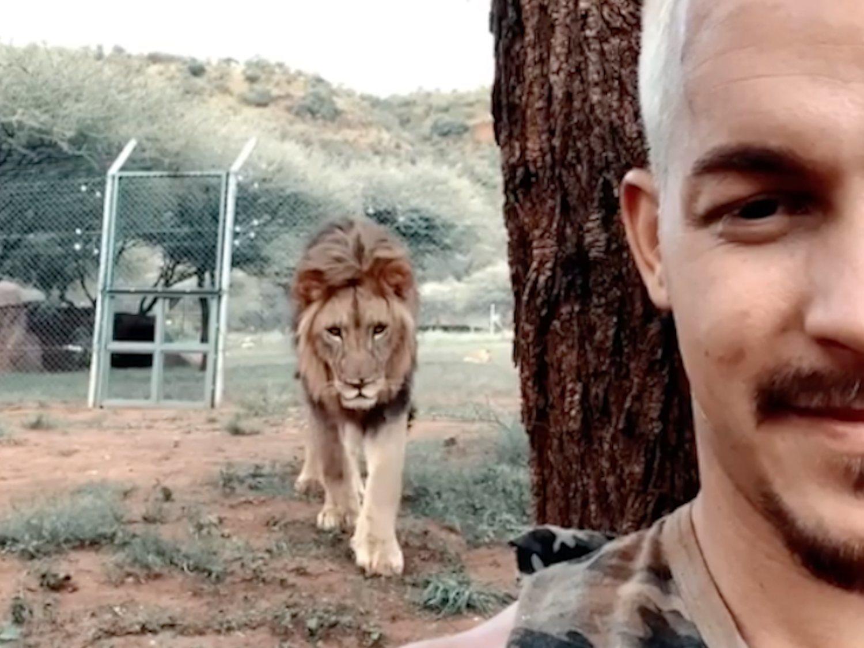 Un influencer se graba mientras un león se acerca hacia él y esto es lo que ocurre